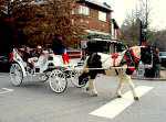 Carriage rides in charming Biltmore Village