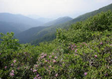 Mount Mitchell State Park view
